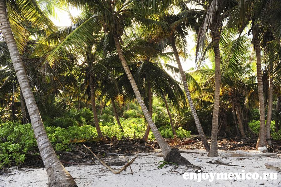 пальмы на пляже в мексике