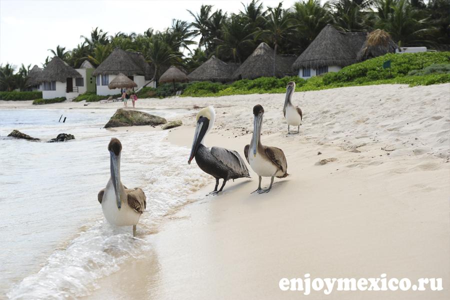 пляжи тулум мексика фото