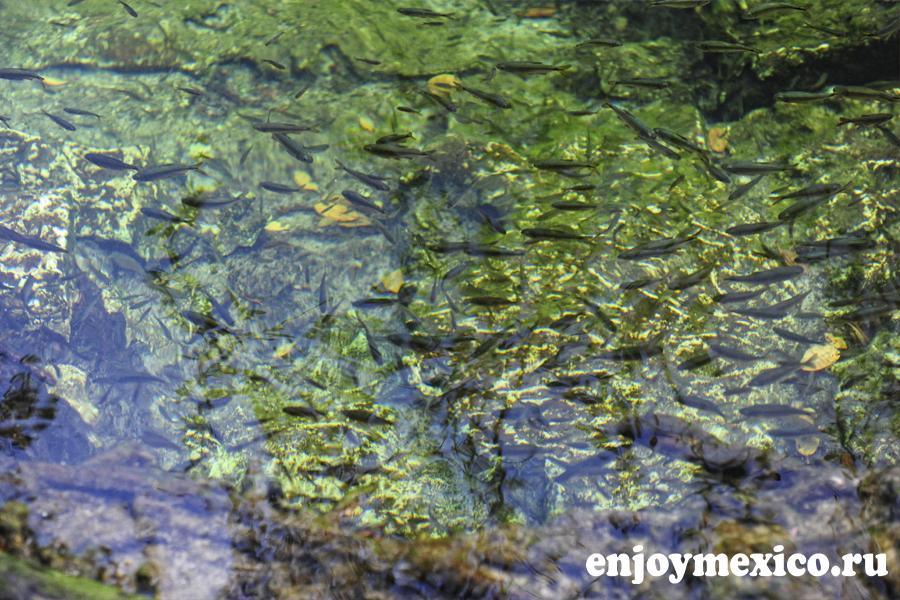 рыбки в сеноте