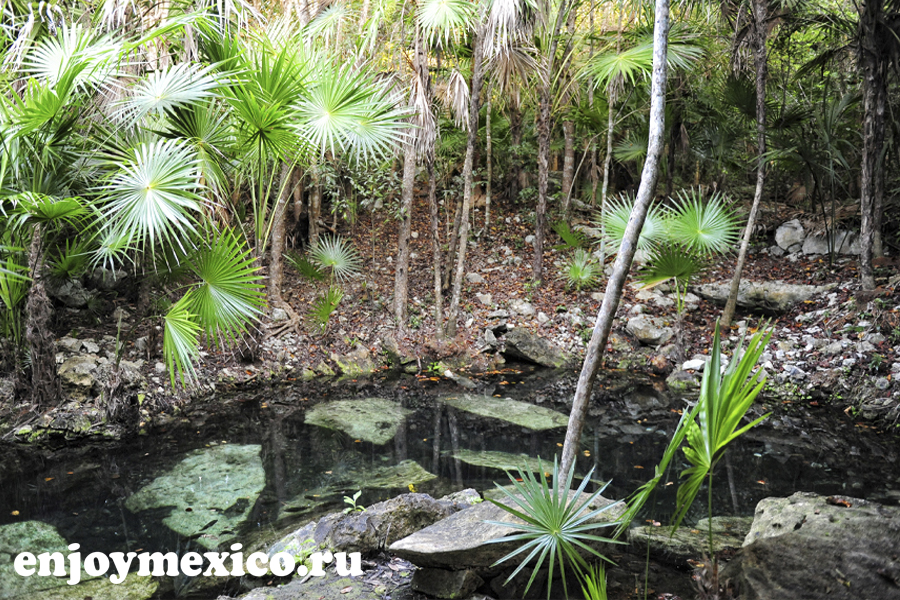 сеноты в мексике открытые