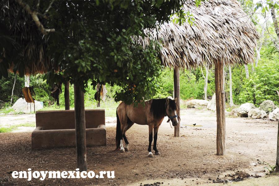 прогулка в лошадями мексика