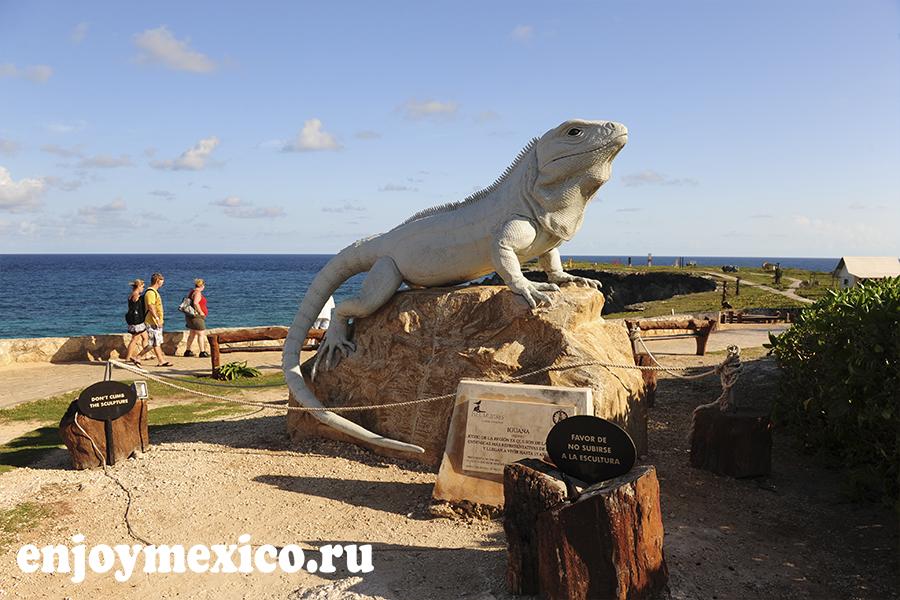 большая игуана на острове женщин