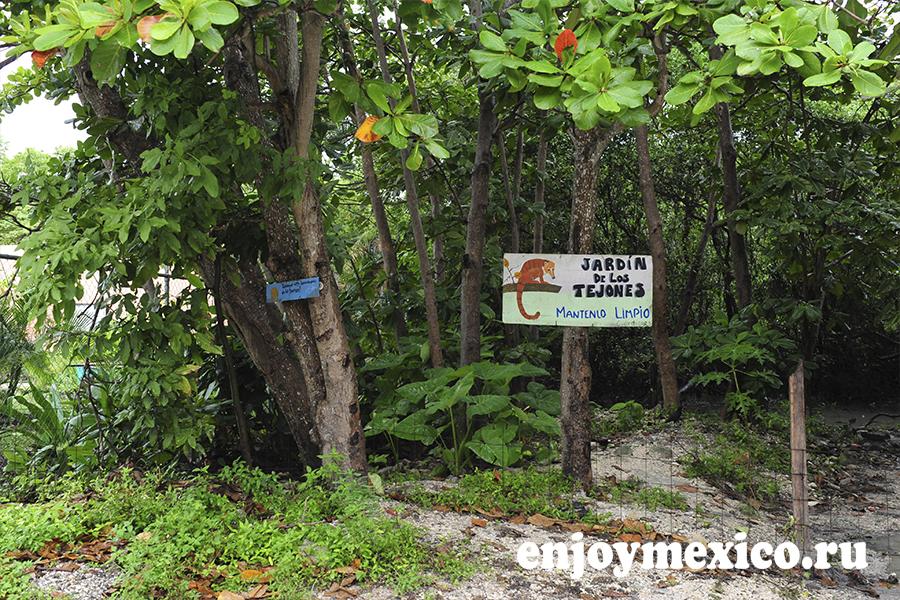 осторожно животное знак пуэрто морелос мексика