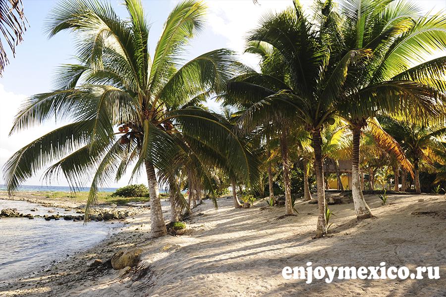 пальмы на пляже паамуль