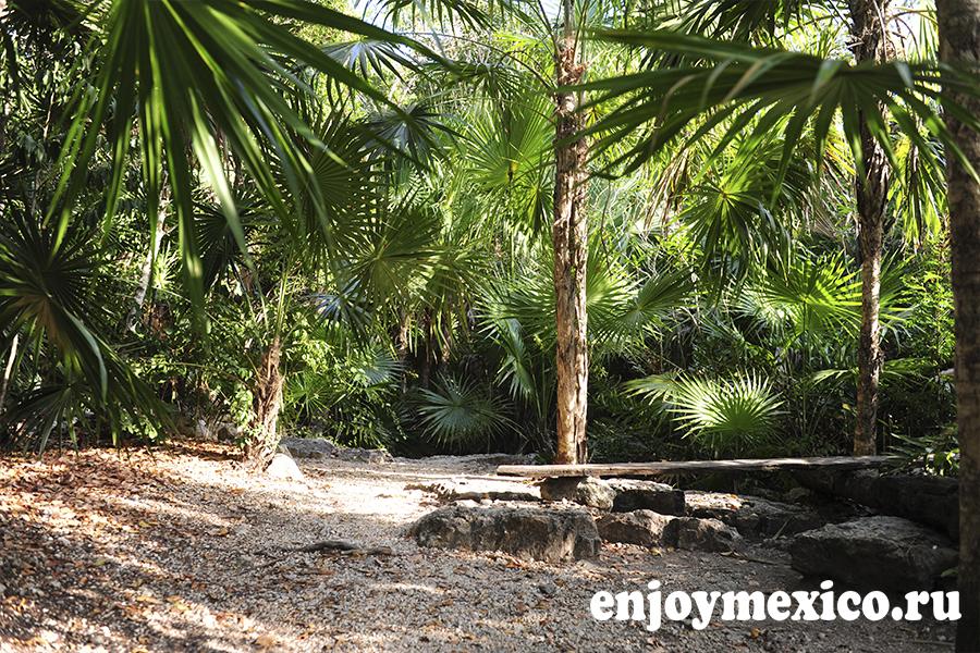 сенот аузль в мексике фото