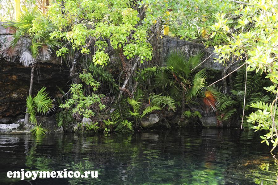 вода в сеноте мексика