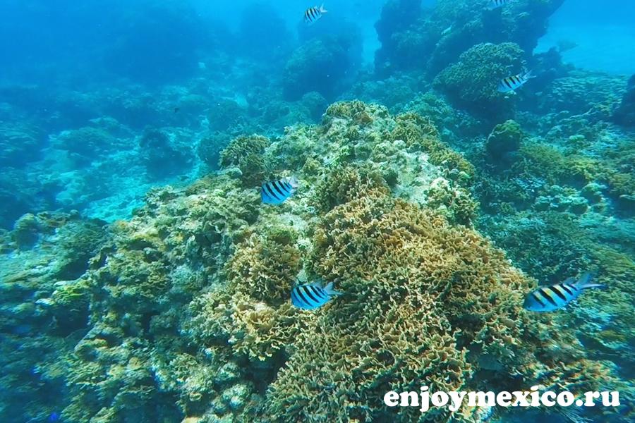 кораловые рифы мексика