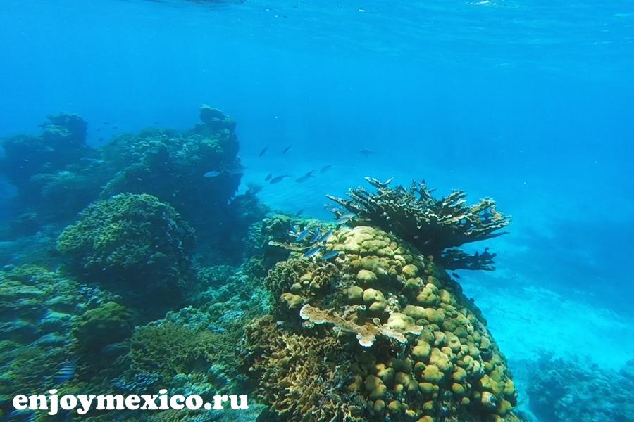 кораловые рифы остров косумель