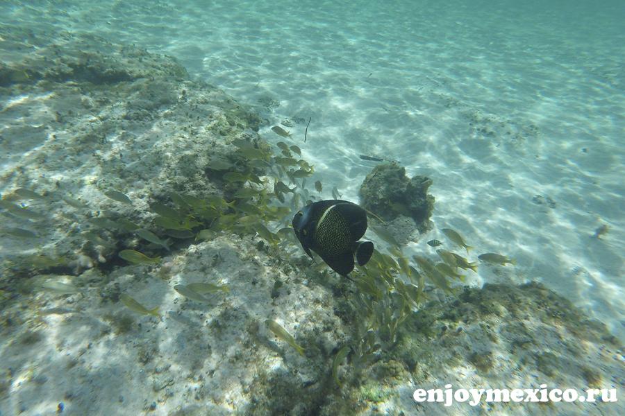 красивый подводный мир косумель