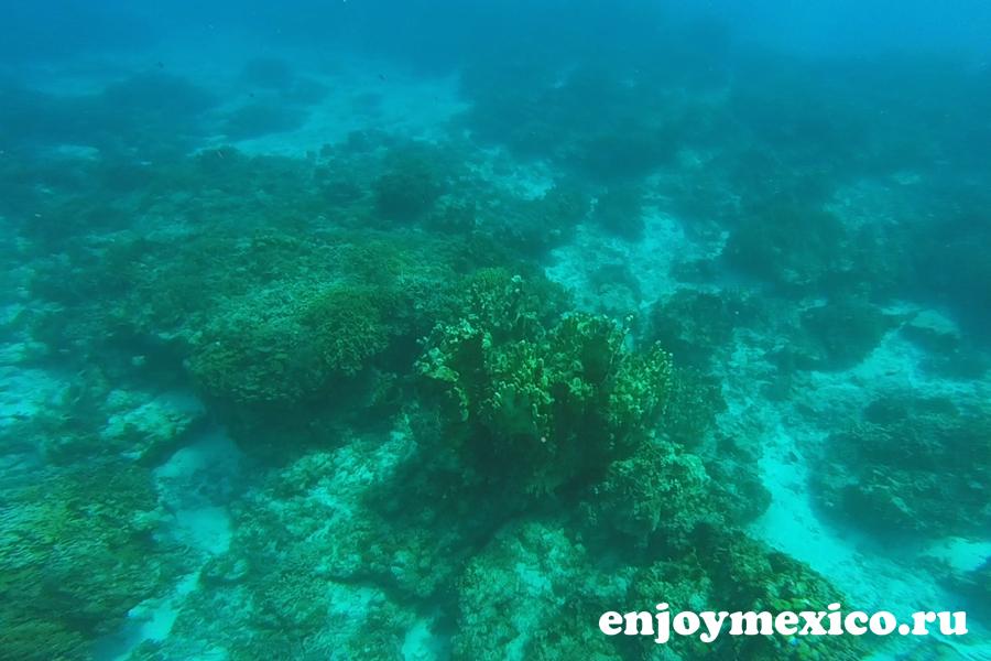 море подводный мир косумель
