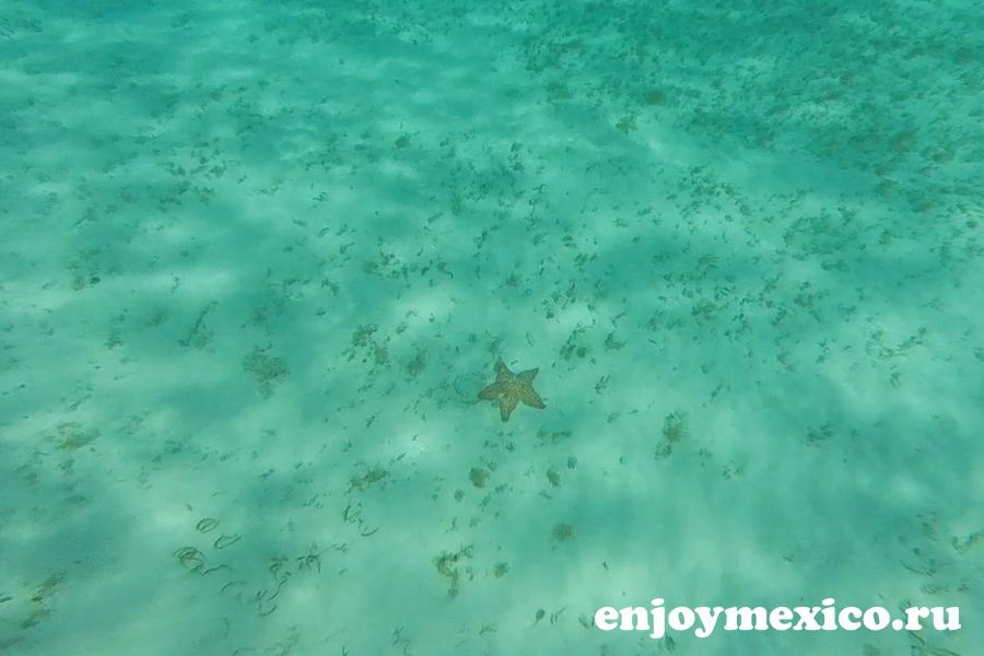морская звезда на дне моря