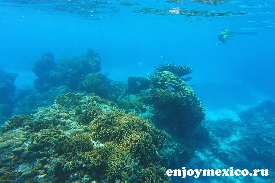 подводный мир косумель