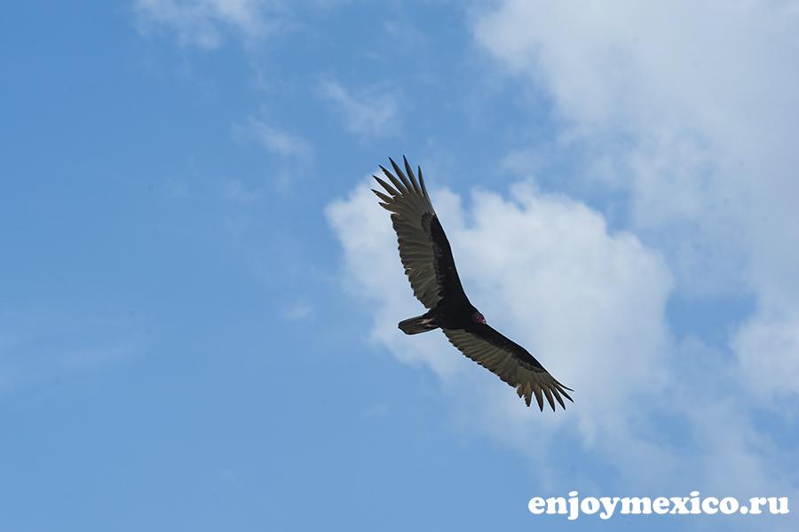 птица в воздухе