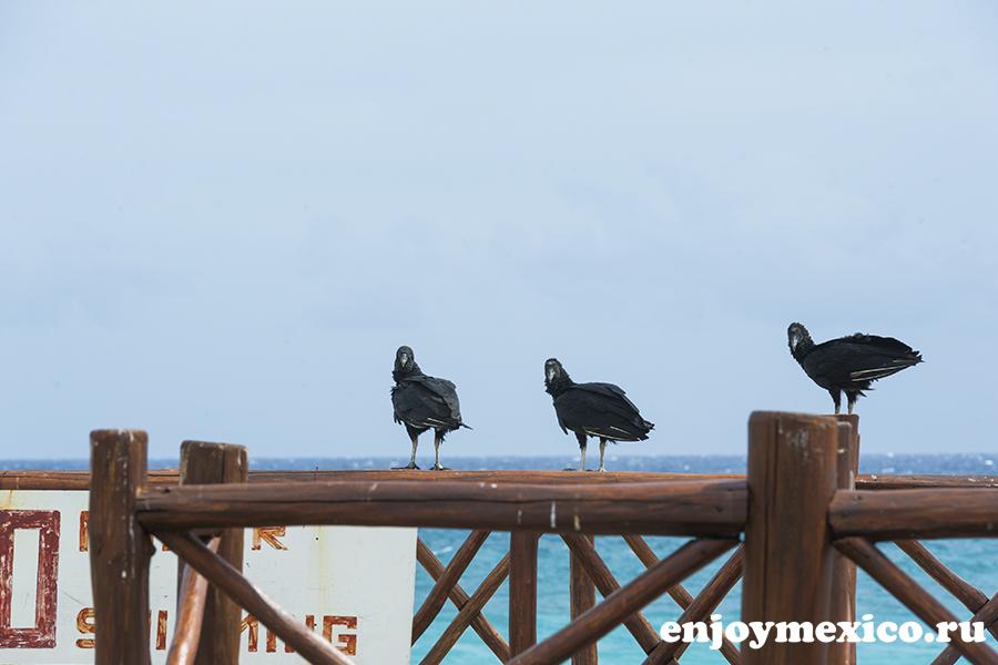 птицы сидят фото