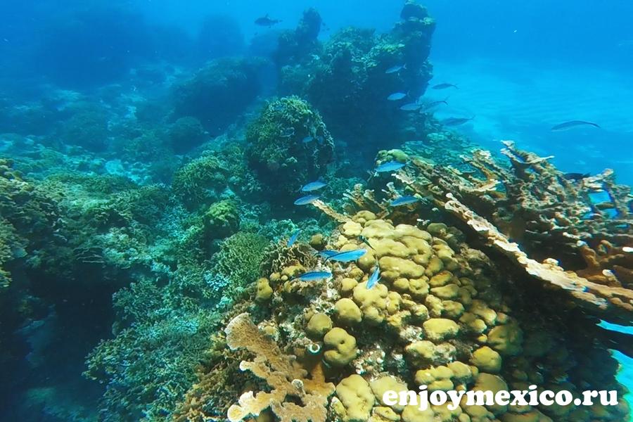 рифы острова косумель фото