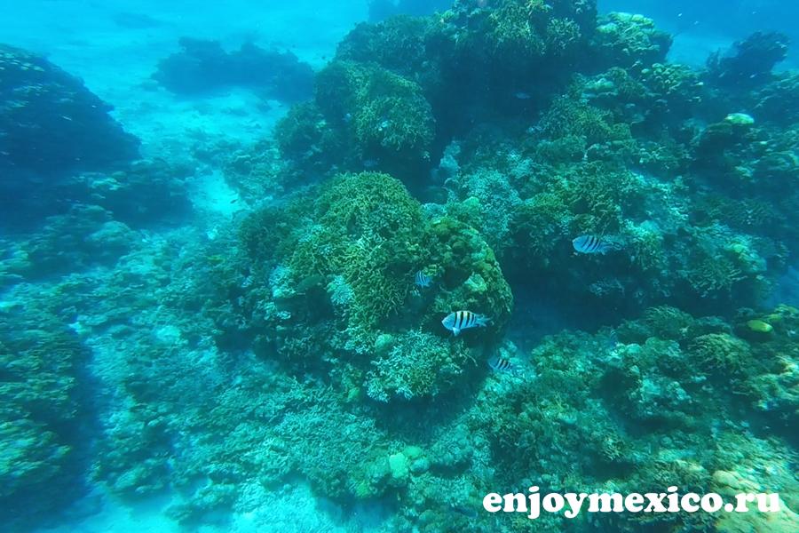 рифы острова косумель