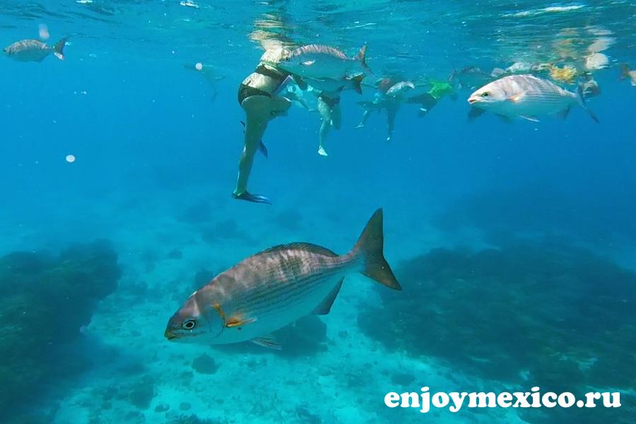 рыбы на рифе