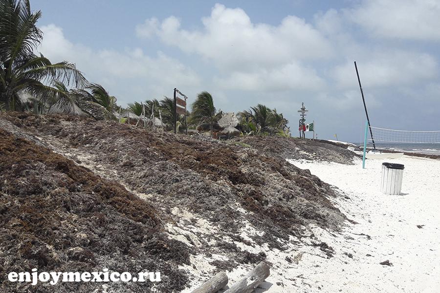 горы водорослей в мексике