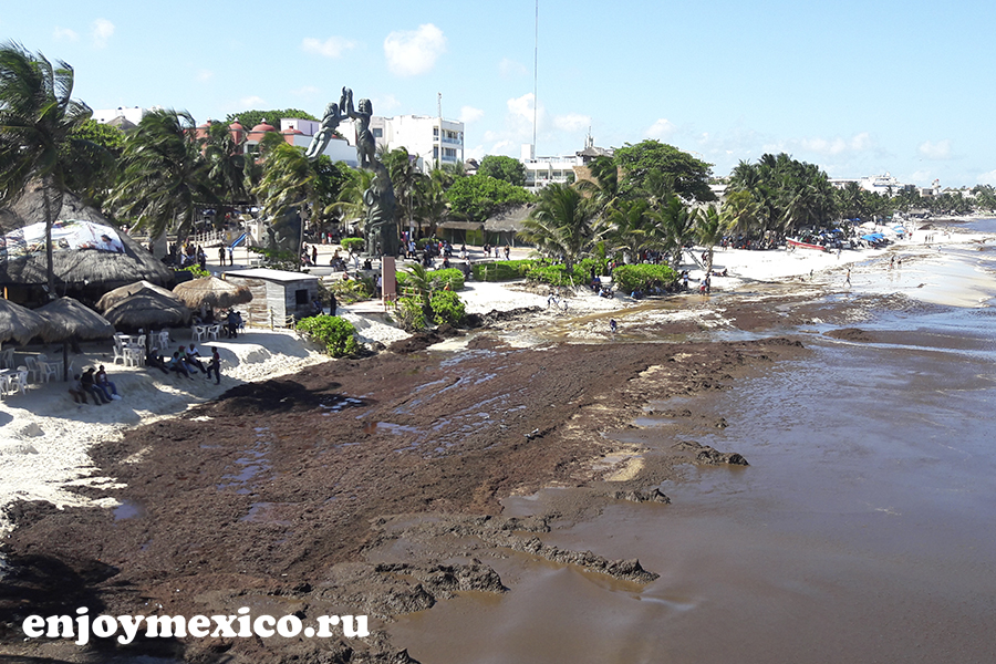 саргассовы водоросли в мексике