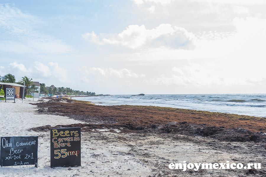 ситуация с водорослями на пляжах в мексике