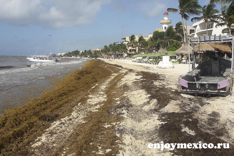 водоросли на пляжах в мексике