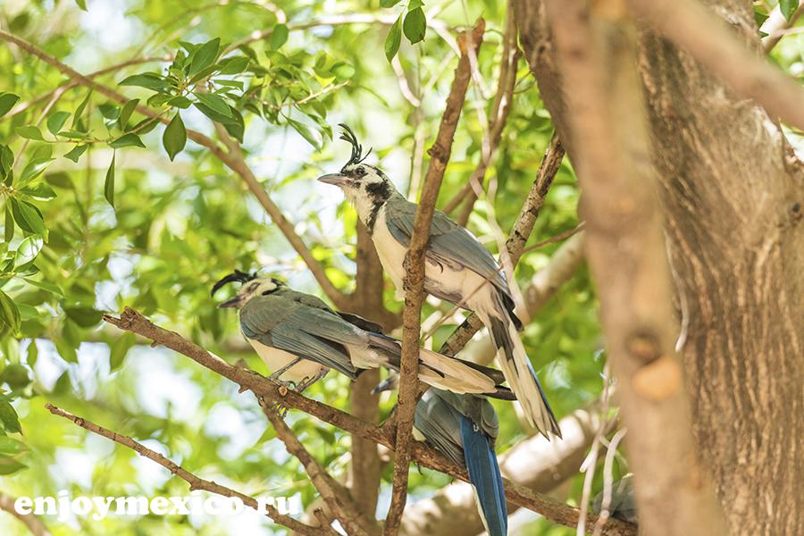 экзотические птицы в мексике