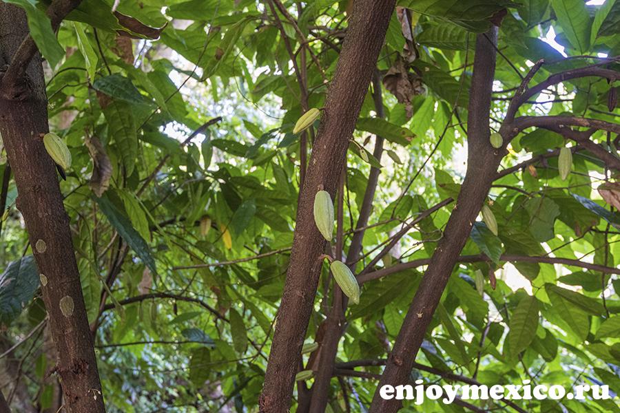 какое на дереве