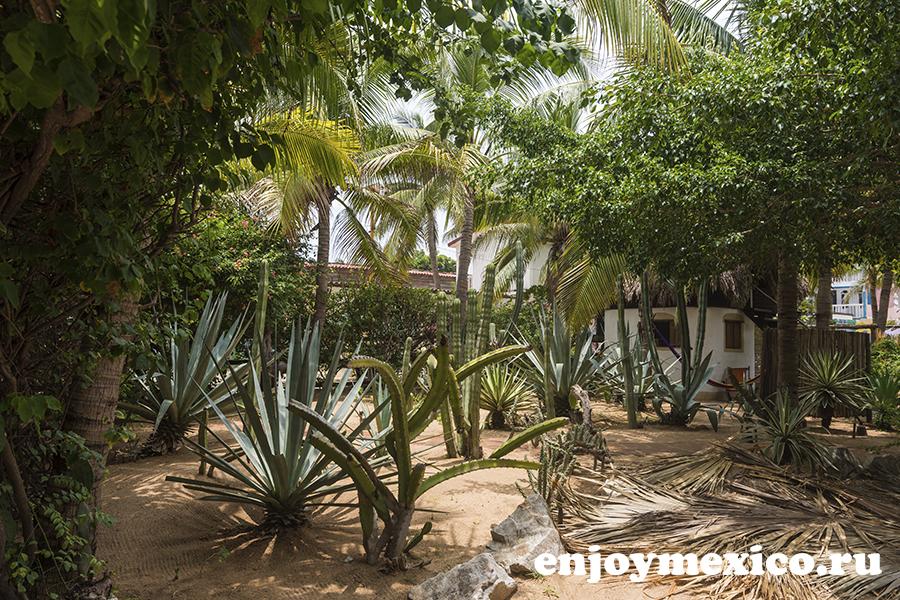 кактусы в центре зиполите мексика