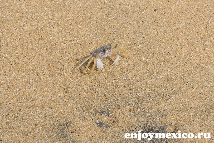 краб на пляже масунте