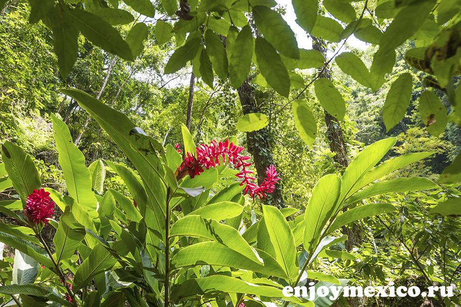 красивый цветок уатулько в мексике