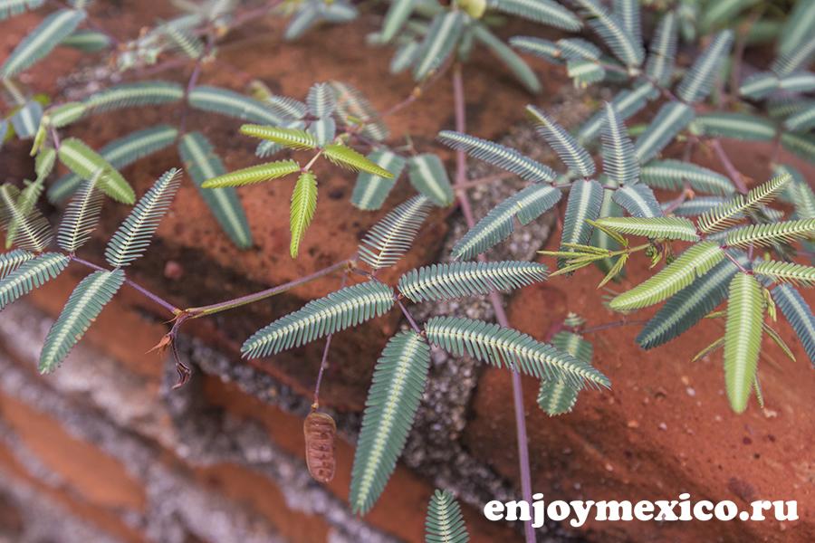 отель шамбала зиполите мексика растение