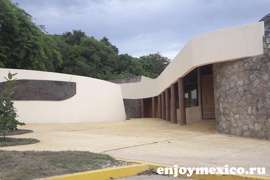 пляж масунте мексика центр тортугас