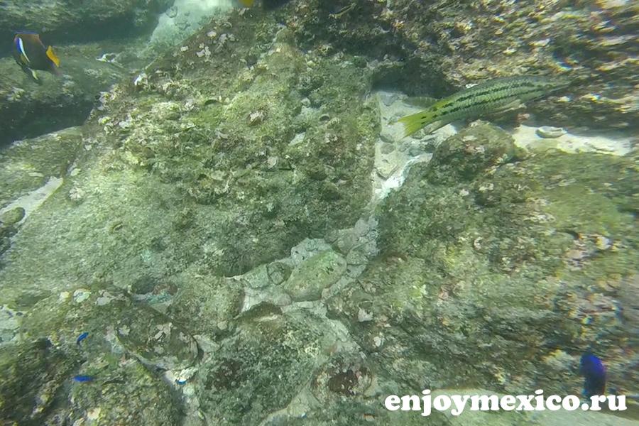 пляж органо уатулько фото рыбы