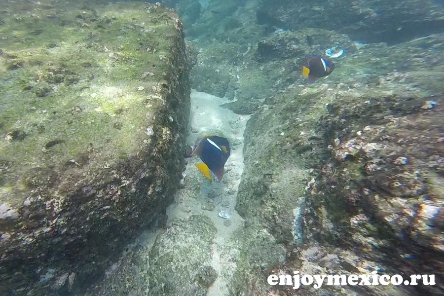 пляж organo уатулько рыба