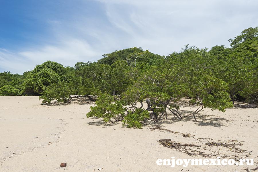 пляж техонсито уатулько мексика природа