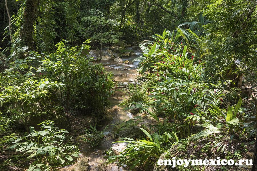 природа в мексике фотография