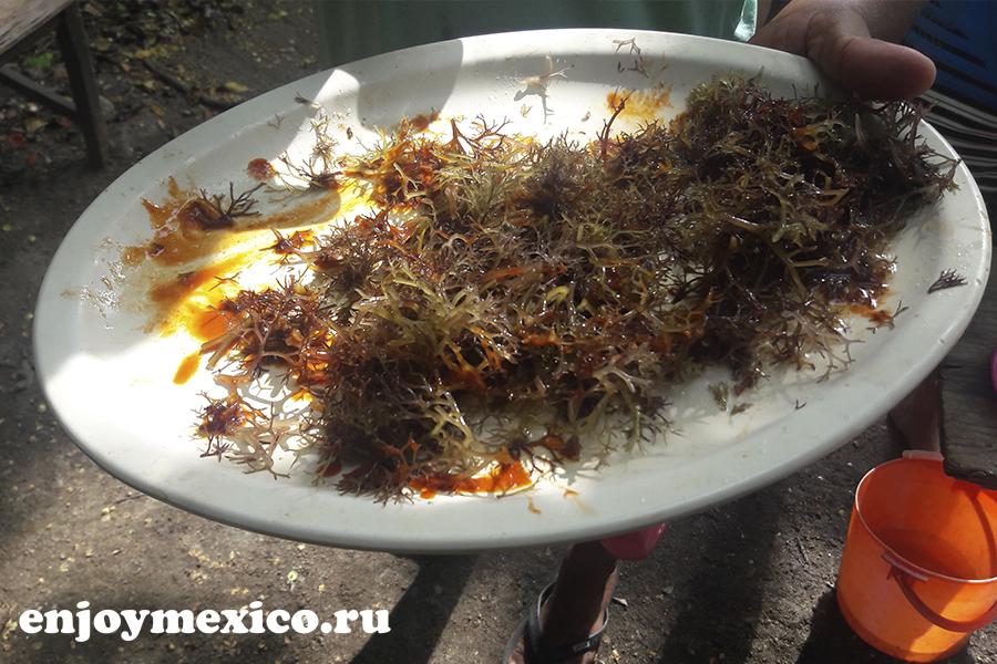 сырые водоросли в мексике