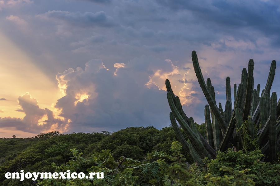 закат и кактус уатулько мексика