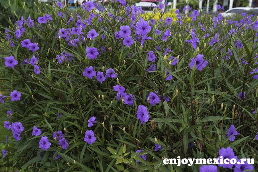 цветы в уатулько