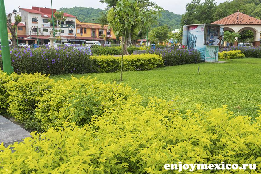 цветы в центре города уатулько